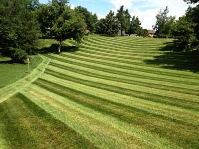 grass mowing service